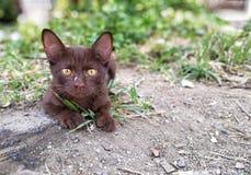Eine braune Miezekatze auf Straße Stockfoto