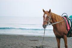 Eine braune Pferdestellung auf einem strandnahen stockfotografie