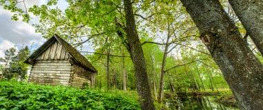 Eine Bretterbude im Wald Stockbild
