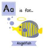 Eine Buchstabeverfolgung Angelfish Stockbilder