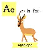 Eine Buchstabeverfolgung antilope Stockbilder