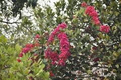Eine bunte Beschaffenheit der roten Blume und der grünen Blätter stockbilder