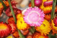 Eine bunte Blume stockfotos