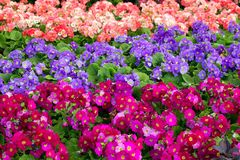 Eine bunte Blume Stockfoto