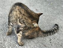 Eine bunte Katze der getigerten Katze stockbild