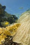 Eine bunte und vibrierende tropische Riffszene. Stockfoto