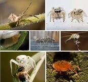 Eine Collage der Fotos der Insekte Stockfotos