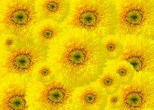 Eine Collage von Sonnenblumen Stockbilder