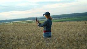 Eine dünne Frau in den Jeans und in einer Kappe geht über ein Weizenfeld und macht Fotos der Ährchen an ihrem Telefon auf einem s stock footage