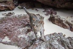Eine der Katzen auf Ladung islandParadise Insel in Krabi-Provinz, Süd-Thailand lizenzfreie stockfotografie