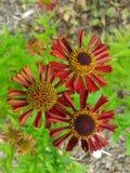 Eine der merkwürdigen Blumen Stockfotografie