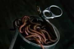 Eine Dose Würmer geöffnet lizenzfreie stockfotos