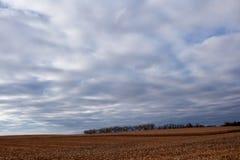 Eine dunkle beunruhigende Landschaft mit einem Feld von Mais Stockbilder