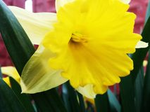 Eine einfache Blume Stockfoto