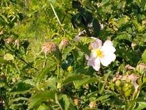 Eine einsame Blume Lizenzfreie Stockfotos