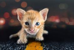 Eine einsame kleine Cat On Road-Zusammenfassung Stockfotos