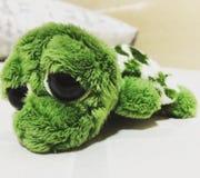 Eine einsame Schildkröte Stockbild