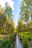 Eine einzelne Bahn im Wald Stockfoto