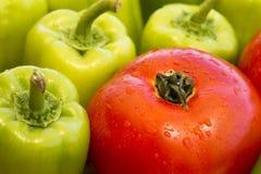 Eine einzelne nasse Tomate und viel grüner grüner Pfeffer Lizenzfreie Stockfotografie