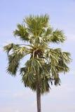 Eine einzelne Palme Lizenzfreie Stockfotos