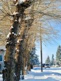 Eine eisige/schneebedeckte Straße lizenzfreie stockfotos