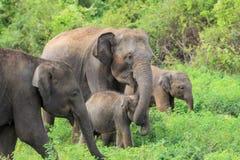 Eine Elefantfamilie mit dem jungen  Lizenzfreies Stockfoto