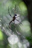 Eine enorme Spinne, die in seinem Netz stillsteht Lizenzfreie Stockfotos