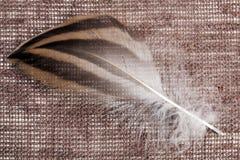 Eine Entenfeder auf einem braunen Segeltuch Lizenzfreies Stockbild