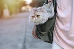 Eine exotische Katze in den kurzen Pelztaschen Und der Inhaber nahm es zum Dorf lizenzfreie stockfotos
