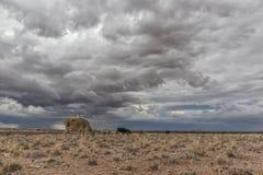 Eine extrem magere Kuh, die in der Namibia-Wüste weiden lässt stockfotografie