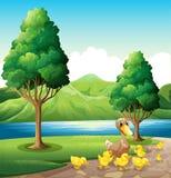 Eine Familie der Ente am Riverbank Lizenzfreies Stockfoto