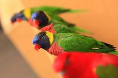 Eine Familie der Papageien. Lizenzfreies Stockfoto
