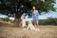 Eine Familie mit einem großen Hund und einem kleinen Kind in den Bergen Ansicht von der Rückseite Raum für Text stockfotografie
