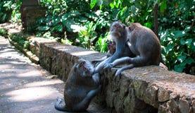 Eine Familie von Affen Stockbilder