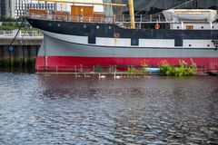 Eine Familie von Schwänen überschreiten durch das Segelschiff Glenlee am Flussufer-Museum in Glasgow, Schottland Stockfoto