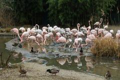 Eine Familienordnung im Zoo von Basel stockfoto