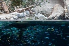 Eine Familienordnung im Zoo von Basel lizenzfreies stockbild