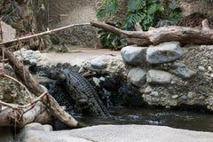 Eine Familienordnung im Zoo von Basel lizenzfreie stockfotografie