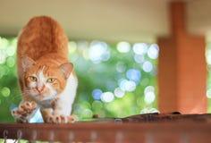 Eine faule Katze mit grünem Hintergrund Stockfoto