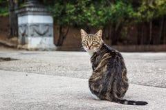 Eine fette Katze der getigerten Katze, die auf der Straße schaut über Schulter in Richtung zur Kamera sitzt Stockfoto