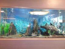 Eine Fischshow lizenzfreies stockbild