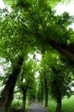 Eine fisheye breite Ansicht über eine Baumgasse im Frühjahr Lizenzfreies Stockfoto