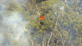 Eine Flamme auf Wald mit dem Rauche, der gewässert erhält stock footage