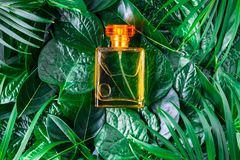 Eine Flasche Parfüm und natürliches Parfüm auf einem belaubten Hintergrund lizenzfreie stockbilder