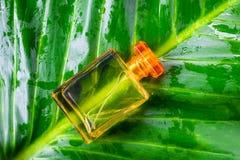 Eine Flasche Parfüm und natürliches Parfüm auf einem belaubten Hintergrund stockbilder