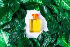 Eine Flasche Parfüm und natürliches Parfüm auf einem belaubten Hintergrund lizenzfreie stockfotografie