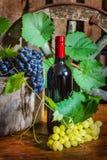 Eine Flasche Wein auf dem Hintergrund der Rebe Lizenzfreie Stockbilder