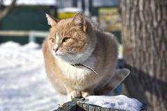 Eine flaumige Katze steht bequem auf einem Zaun still Lizenzfreie Stockfotos