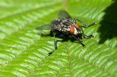 Eine Fliege Lizenzfreies Stockfoto