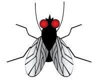 Eine Fliege vektor abbildung